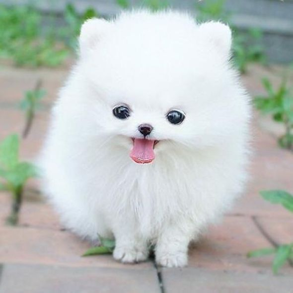 Adorable Puppy Pictures That Will Make Your Day Better 1984918276