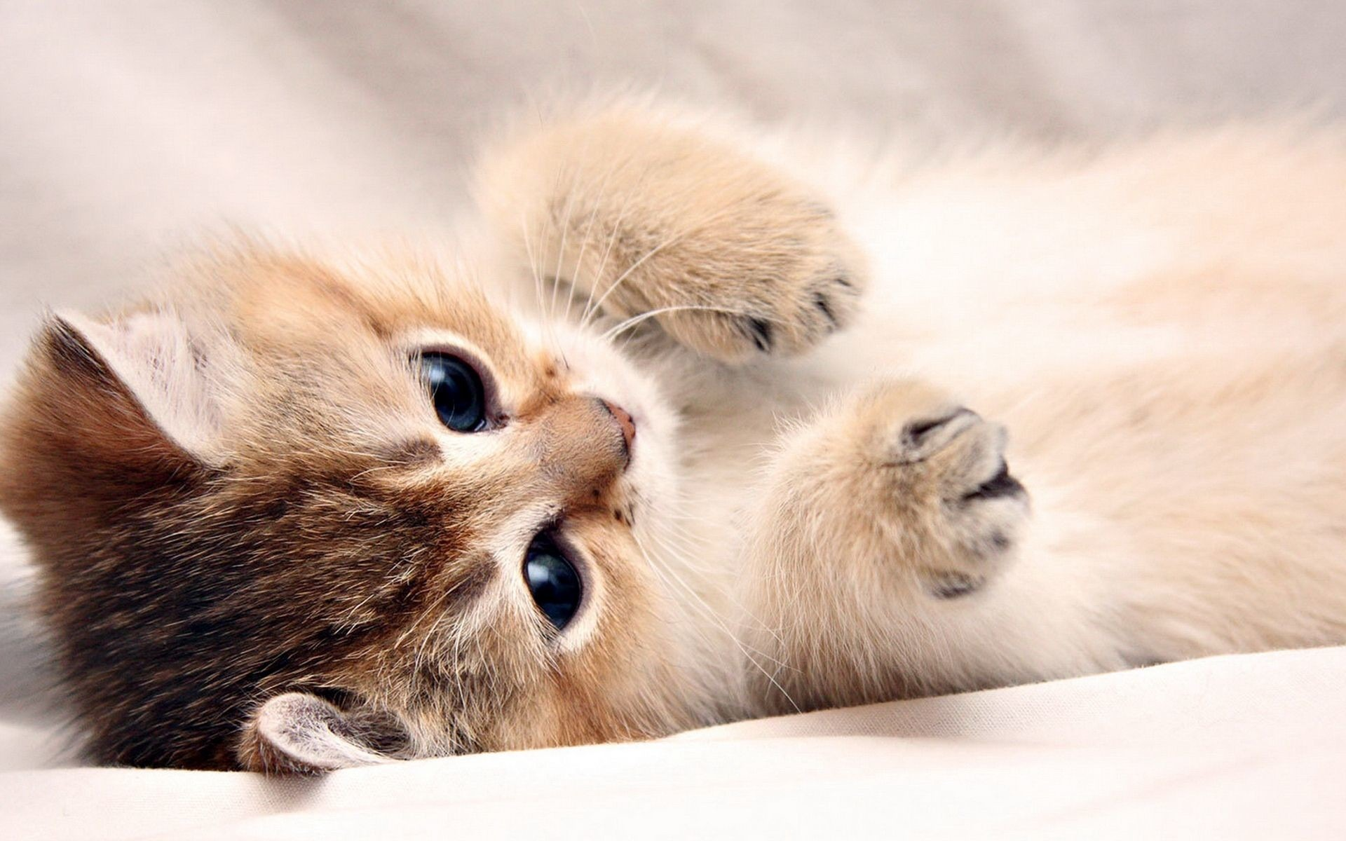 20 Super Adorable Cat Pictures That Will Make You Happy 1533466463