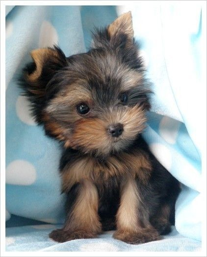 Adorable Puppy Pictures That Will Make Your Day Better 1289901623