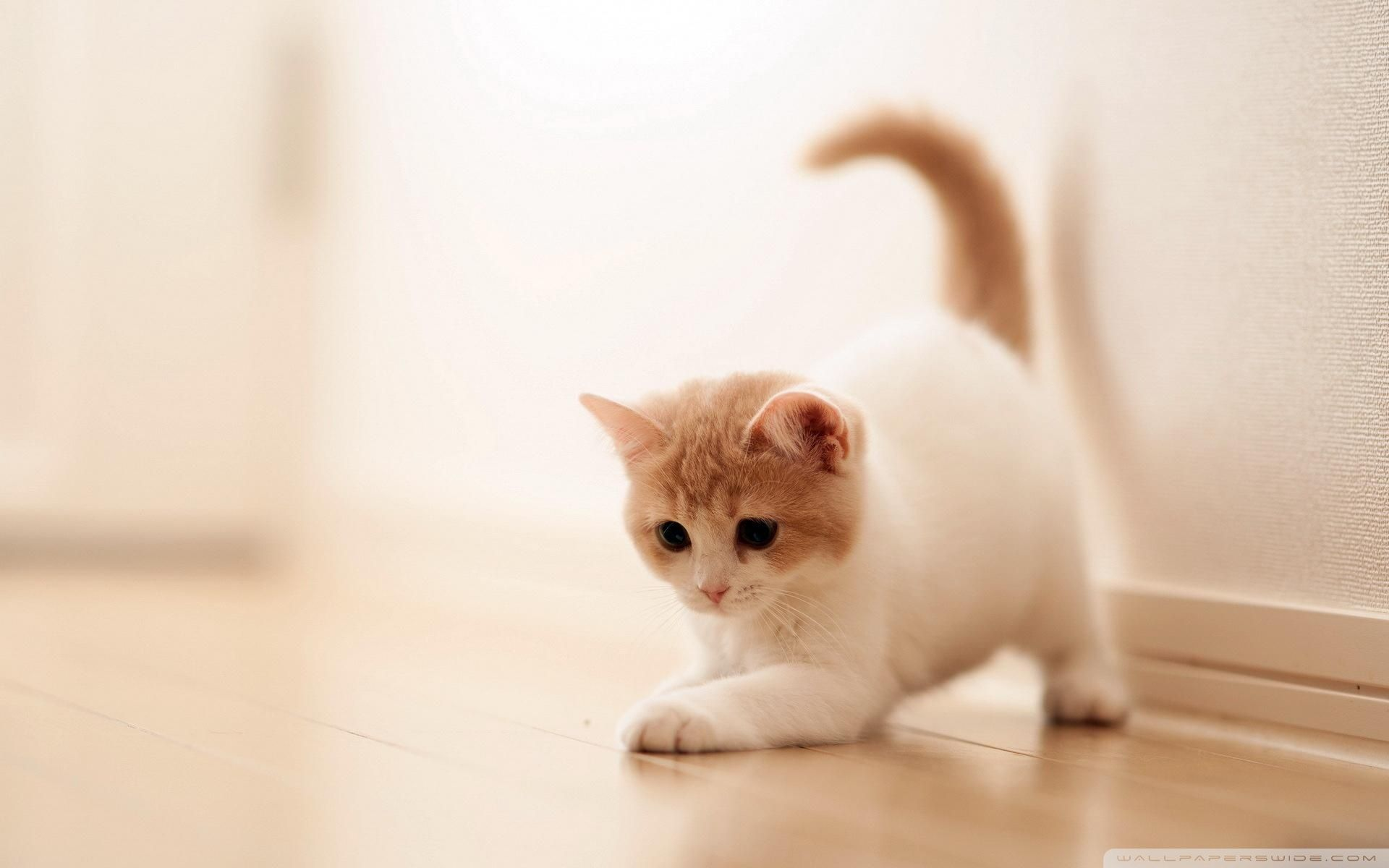 20 Super Adorable Cat Pictures That Will Make You Happy 607071036
