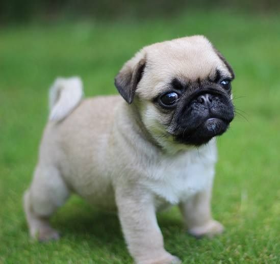 Adorable Puppy Pictures That Will Make Your Day Better 898428953