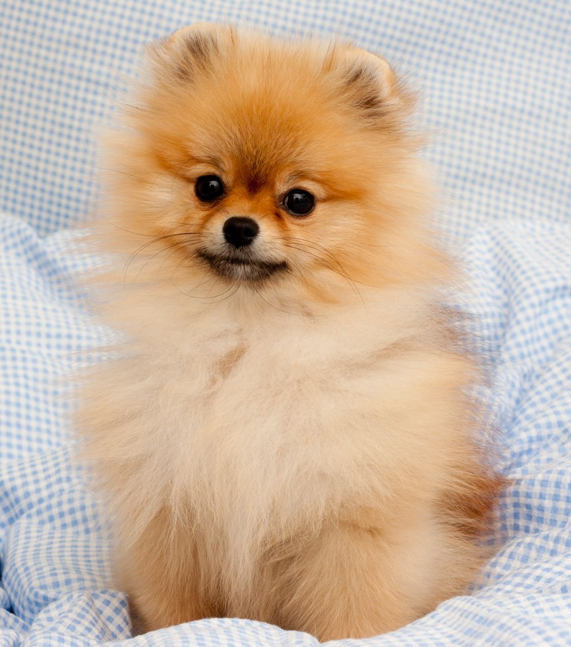 Adorable Puppy Pictures That Will Make Your Day Better 706722799