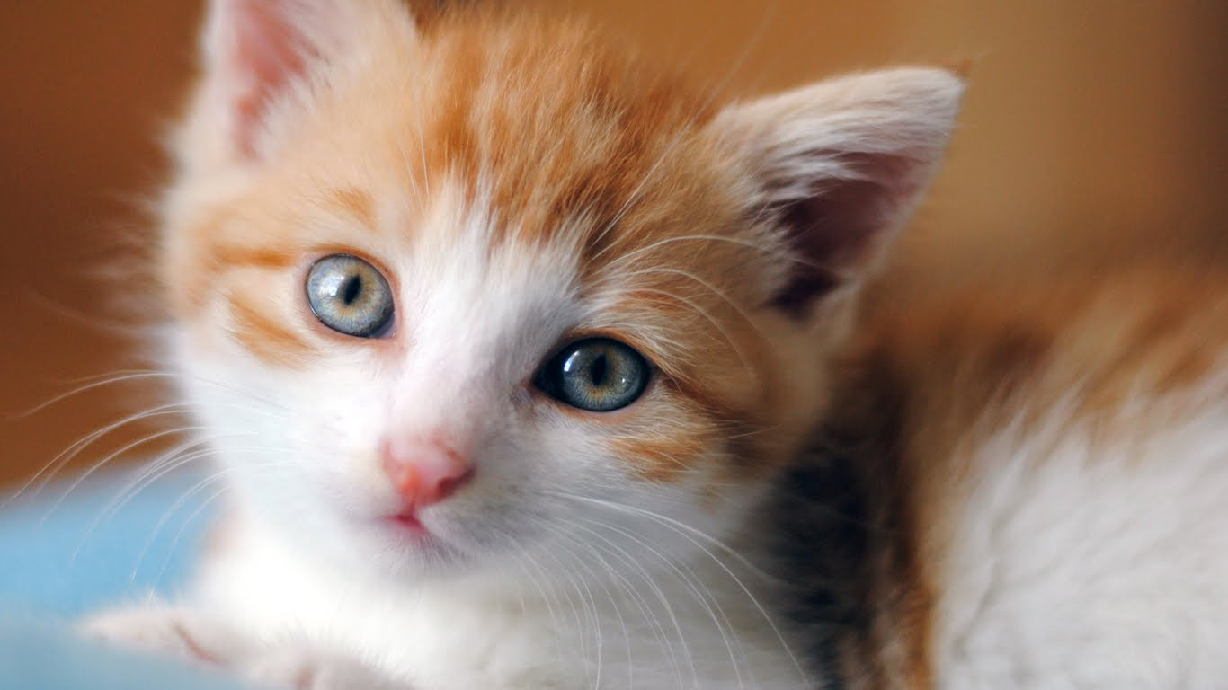 20 Super Adorable Cat Pictures That Will Make You Happy 311668151