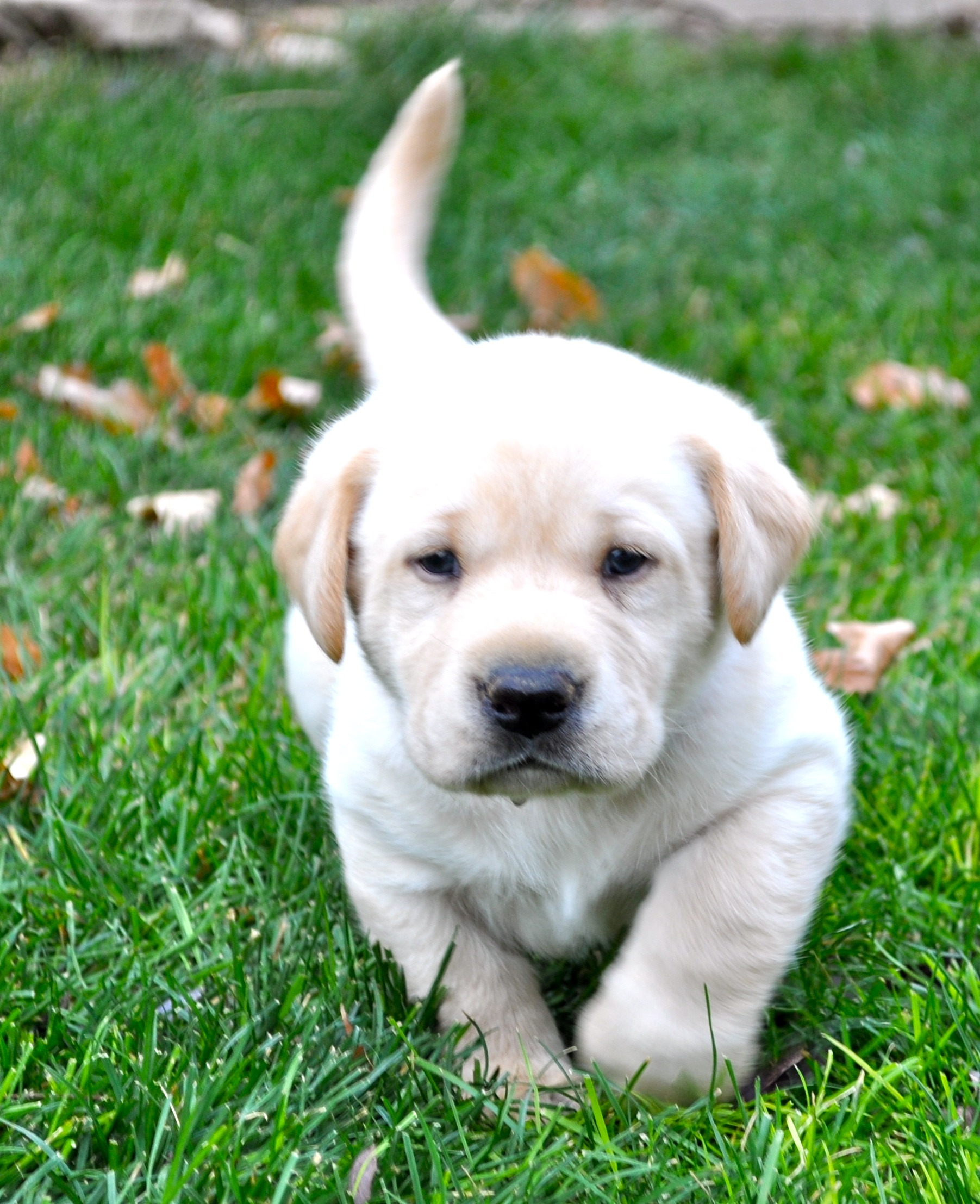 Adorable Puppy Pictures That Will Make Your Day Better 546529274
