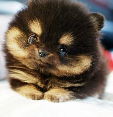 Adorable Puppy Pictures That Will Make Your Day Better 572644563
