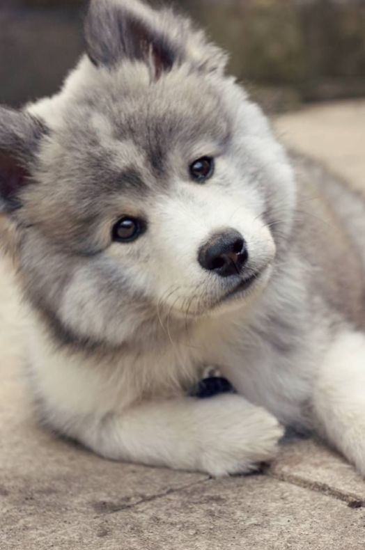 Adorable Puppy Pictures That Will Make Your Day Better 438886436