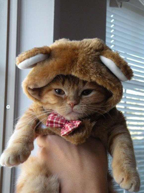 20 Super Adorable Cat Pictures That Will Make You Happy 2054607516