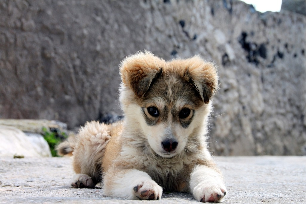 Adorable Puppy Pictures That Will Make Your Day Better 1769711681