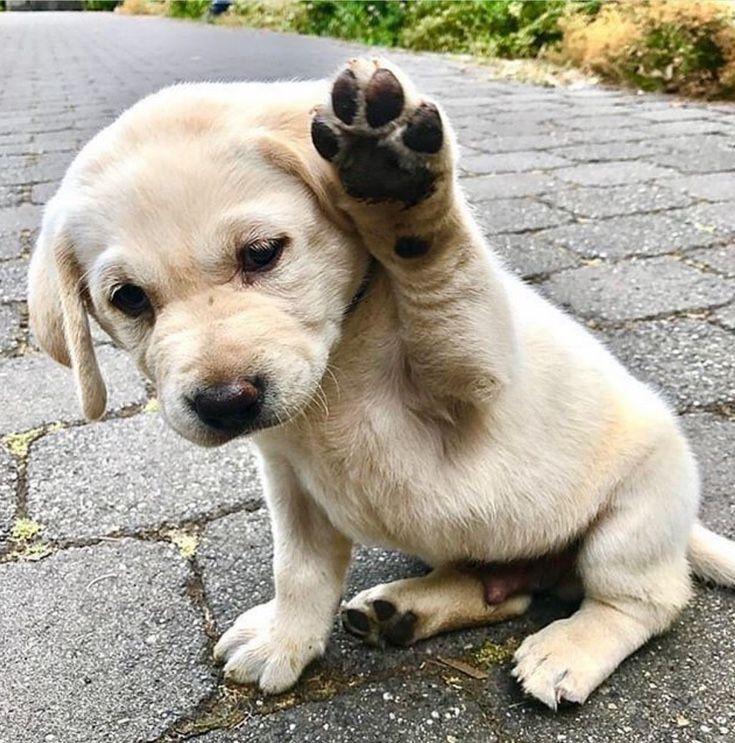 Adorable Puppy Pictures That Will Make Your Day Better 1733869573