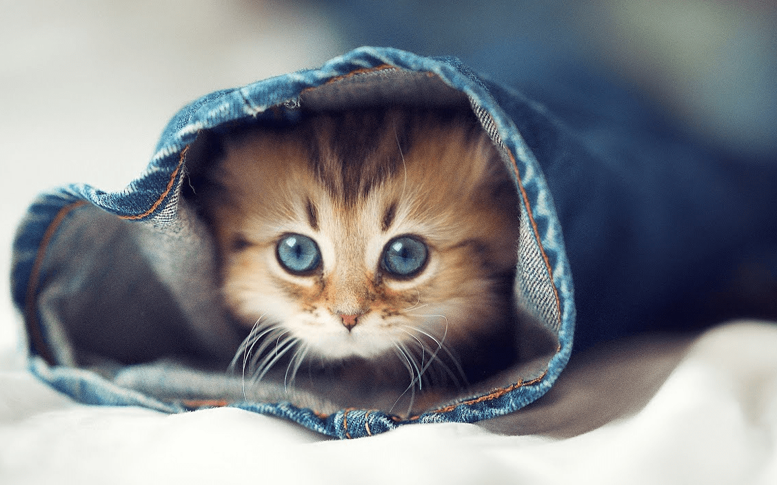 20 Super Adorable Cat Pictures That Will Make You Happy 897331570