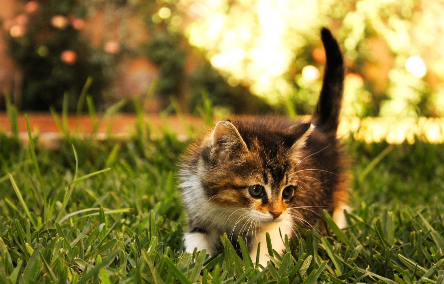 20 Super Adorable Cat Pictures That Will Make You Happy 2073459941