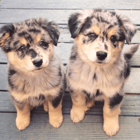 Adorable Puppy Pictures That Will Make Your Day Better 1799605169