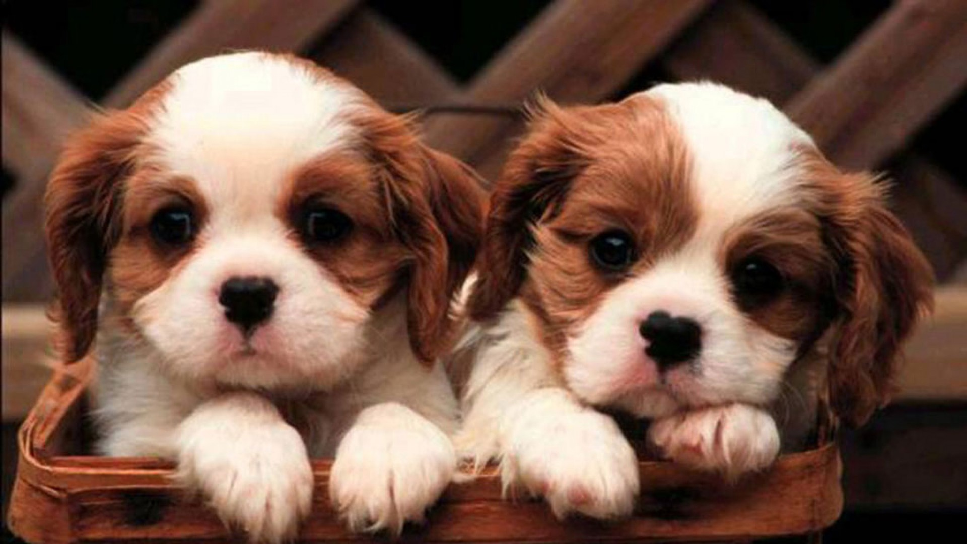 Adorable Puppy Pictures That Will Make Your Day Better 1090706790