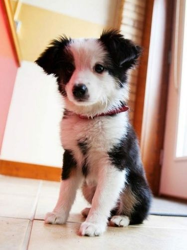 Adorable Puppy Pictures That Will Make Your Day Better 1059885485
