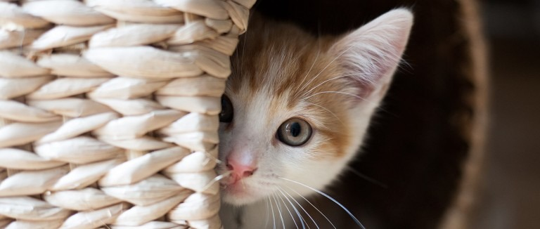 20 Super Adorable Cat Pictures That Will Make You Happy 86573538