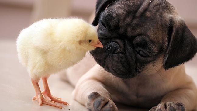 Adorable Puppy Pictures That Will Make Your Day Better 1776773648