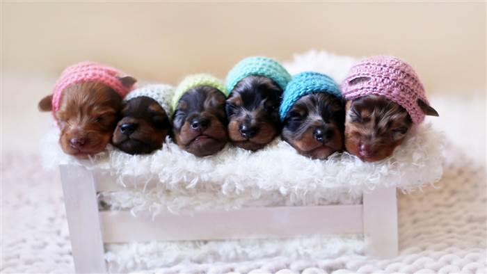 Adorable Puppy Pictures That Will Make Your Day Better 1194370177