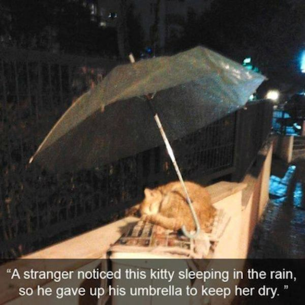 Pictures That Will Restore Your Faith In Humanity 1421335082