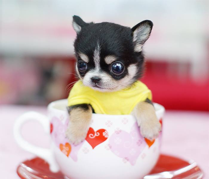 Adorable Puppy Pictures That Will Make Your Day Better 2002088600