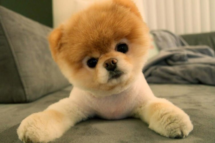 The Cutest Puppy Photos On The Net