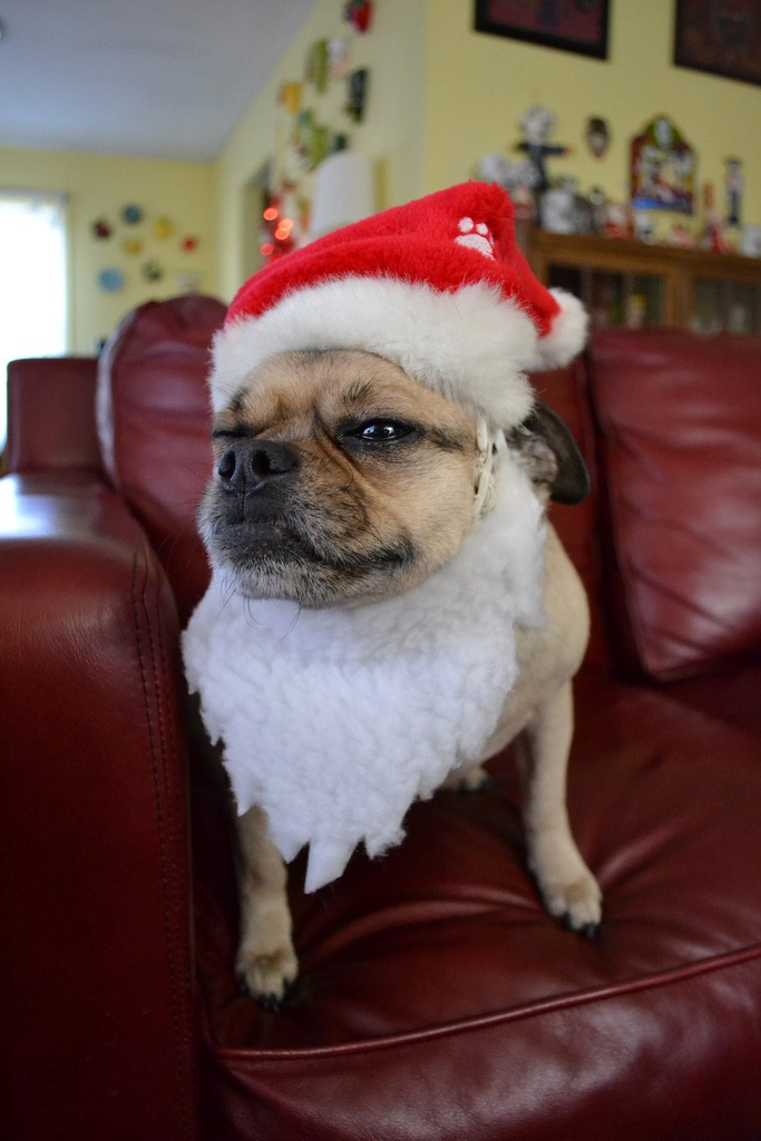 25 Cute Animals Dressed Up For Christmas