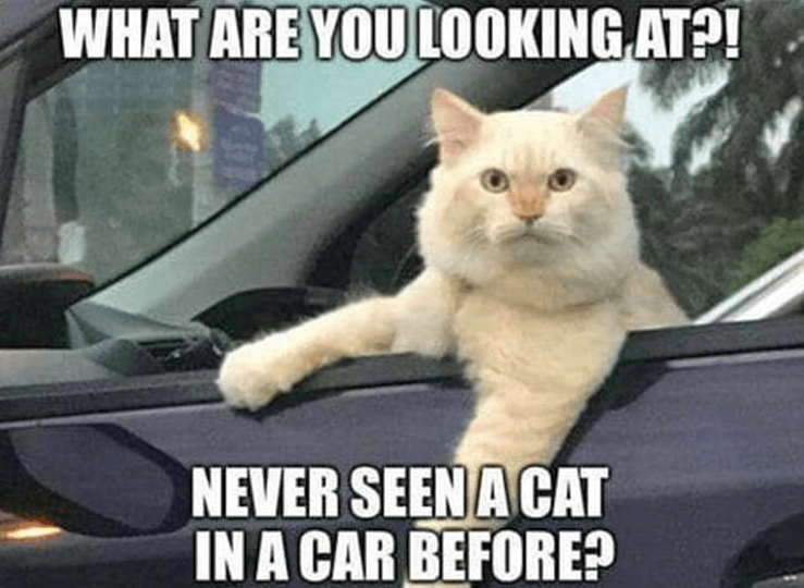 20 Of The Top Funniest Animal Pictures