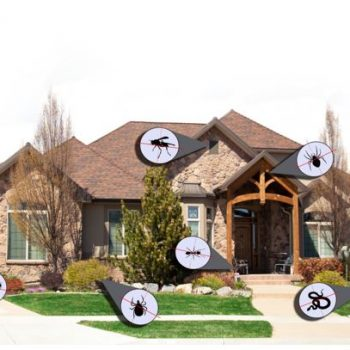 7 Tips you can use to ensure your home is free of bugs and pests