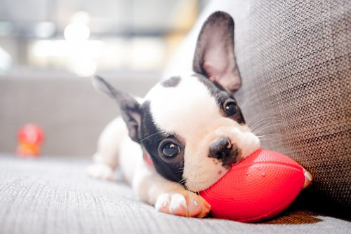 22 Adorable Puppy Pictures