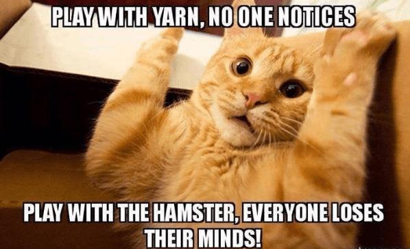 20 Hilarious Cat Memes