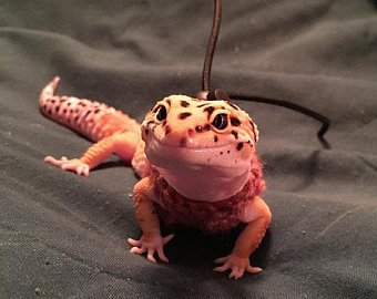 10 Adorable Pet Gecko Pictures And Fun Facts