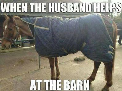 20 Really Funny Horse Memes 36024990