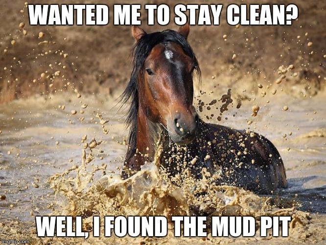20 Really Funny Horse Memes 2060134758