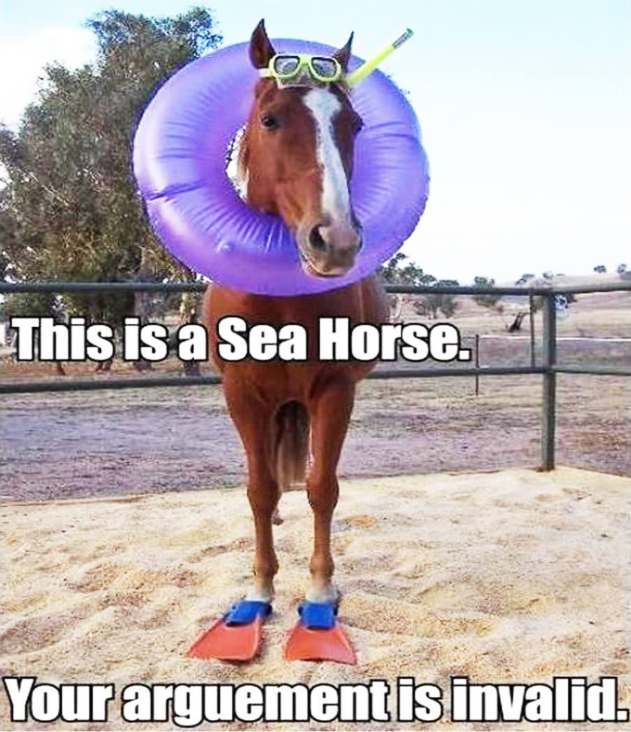 20 Really Funny Horse Memes 1274623060