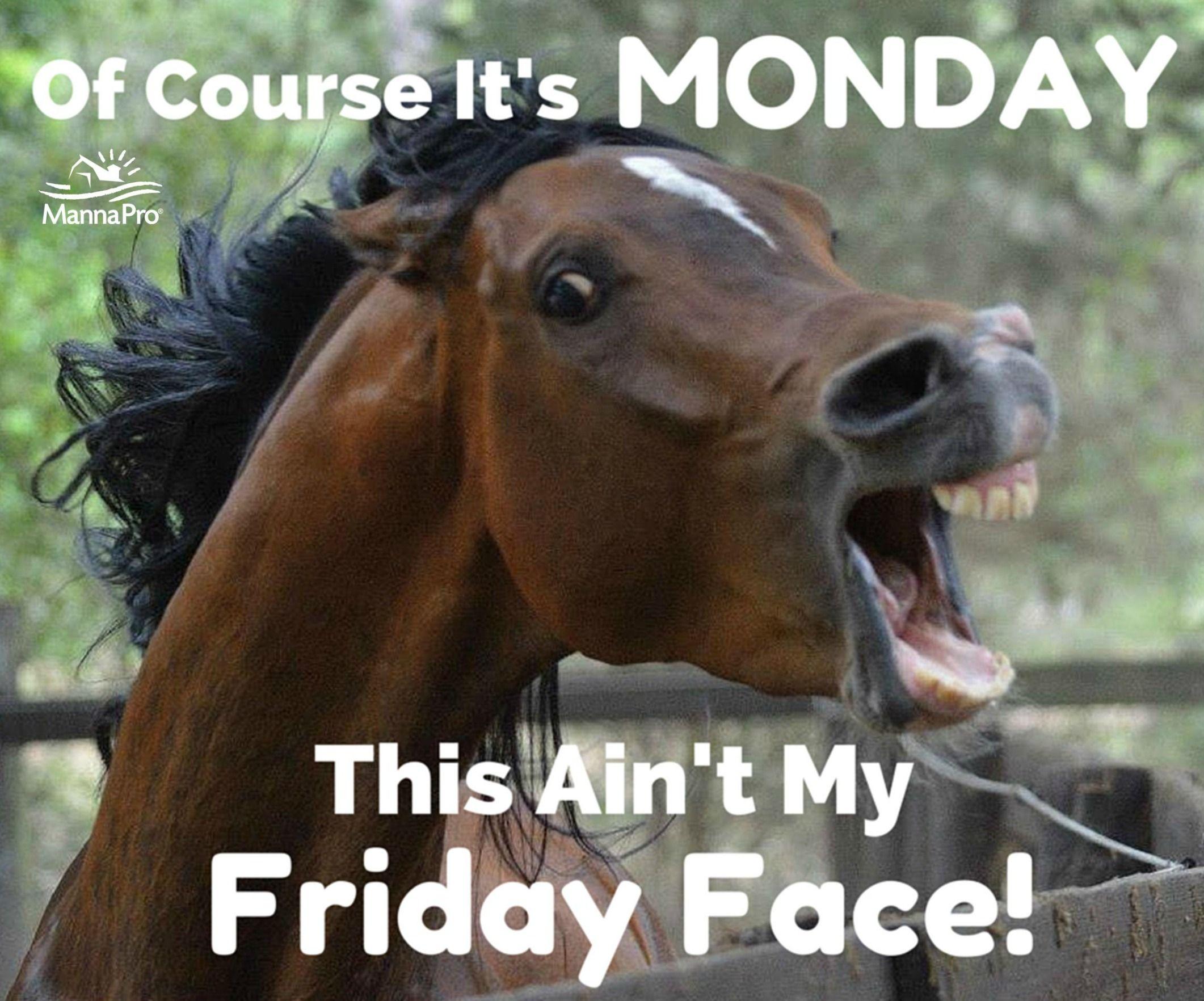 20 Really Funny Horse Memes 1223090375