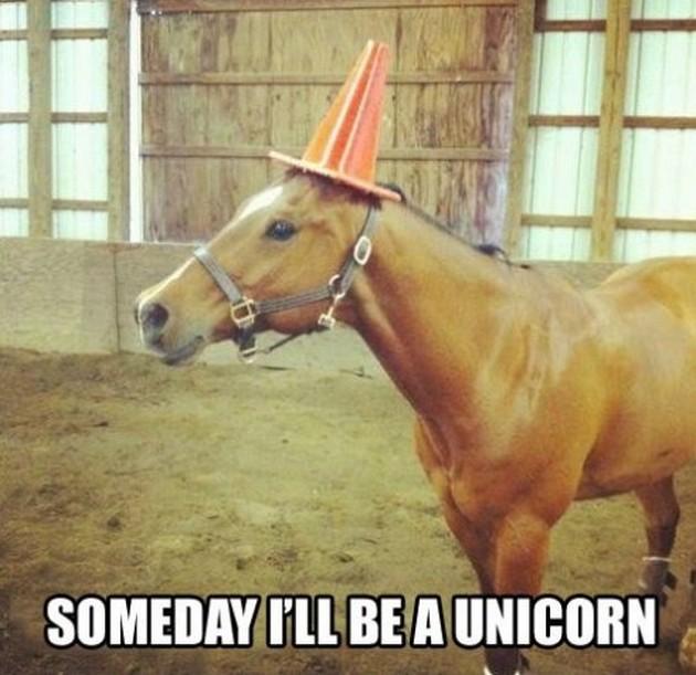 20 Really Funny Horse Memes 1239125106