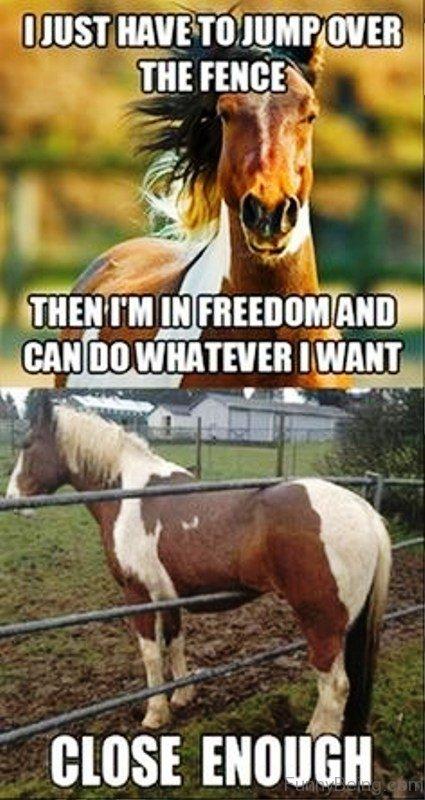20 Really Funny Horse Memes 1608175320