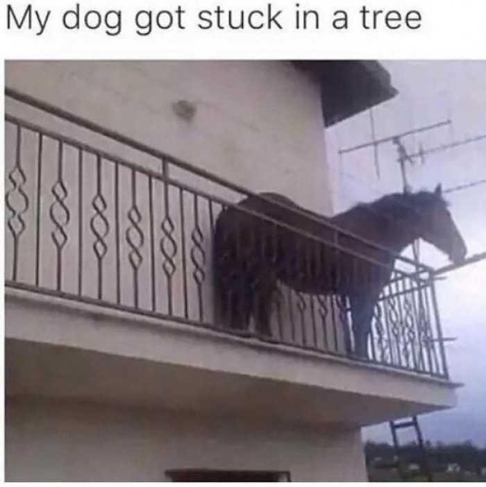 20 Really Funny Horse Memes 1353525447