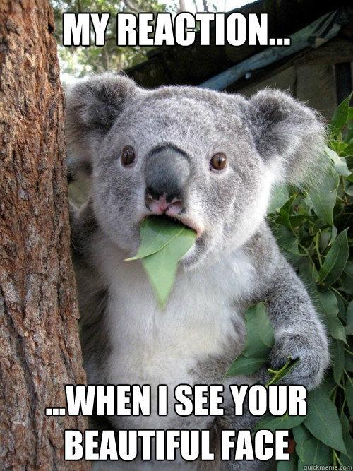 50 Funny Animal Memes