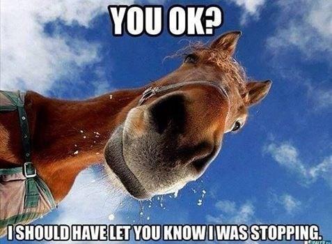 20 Really Funny Horse Memes