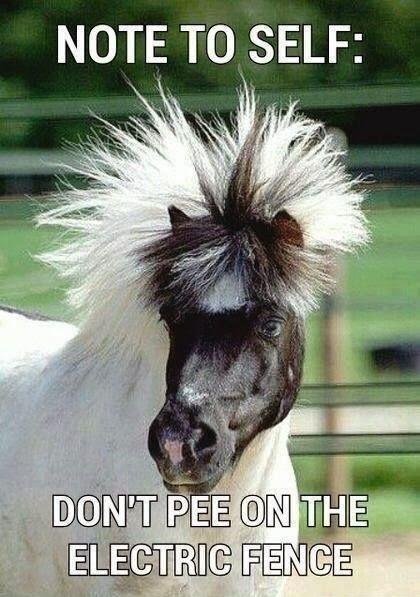 20 Really Funny Horse Memes 1633242103