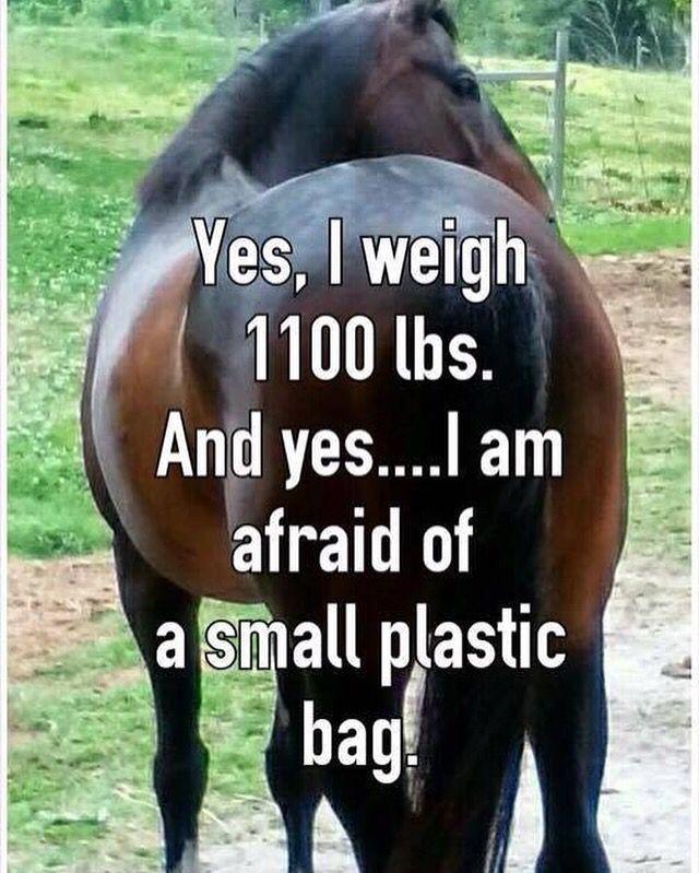20 Really Funny Horse Memes 1453453273