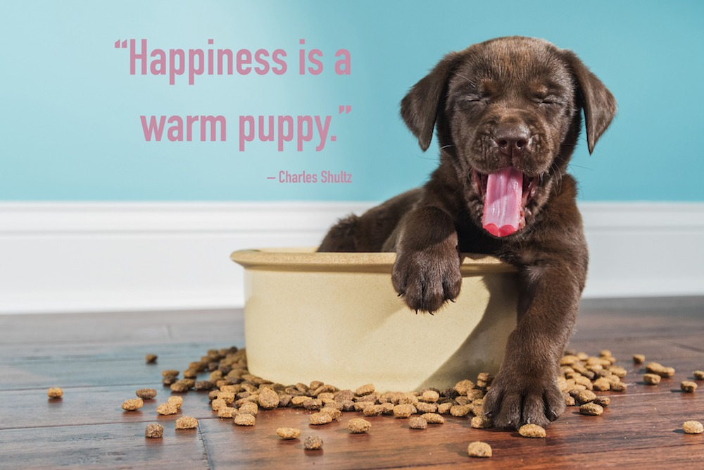 20 Special Quotes For Pet Lovers