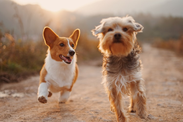 5 Things You Can Do To Keep Your Pet Healthy