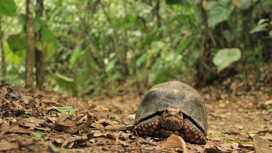 Awesome Facts About Tortoise 767043772