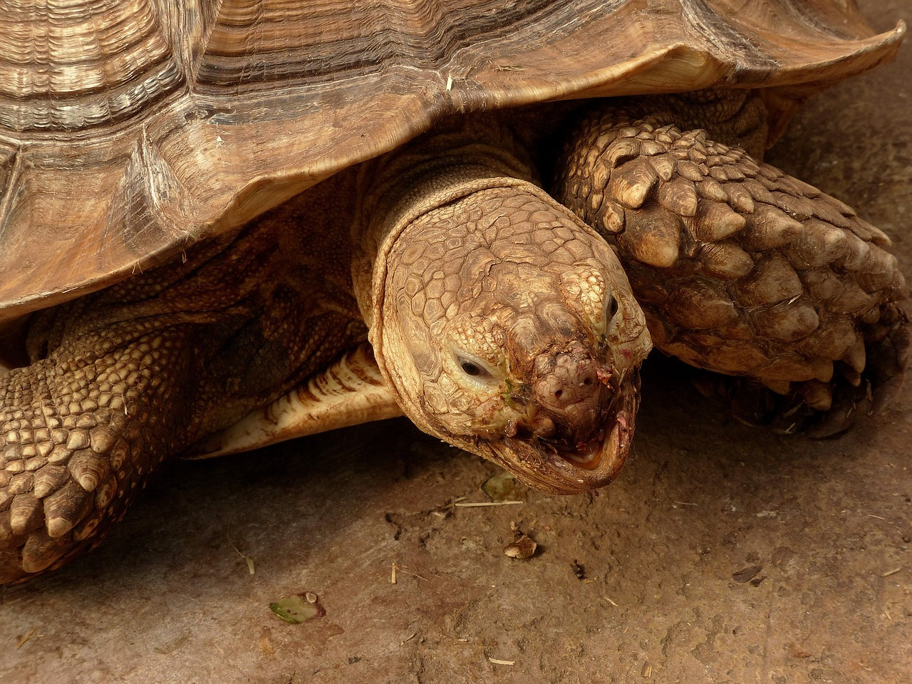 Awesome Facts About Tortoise