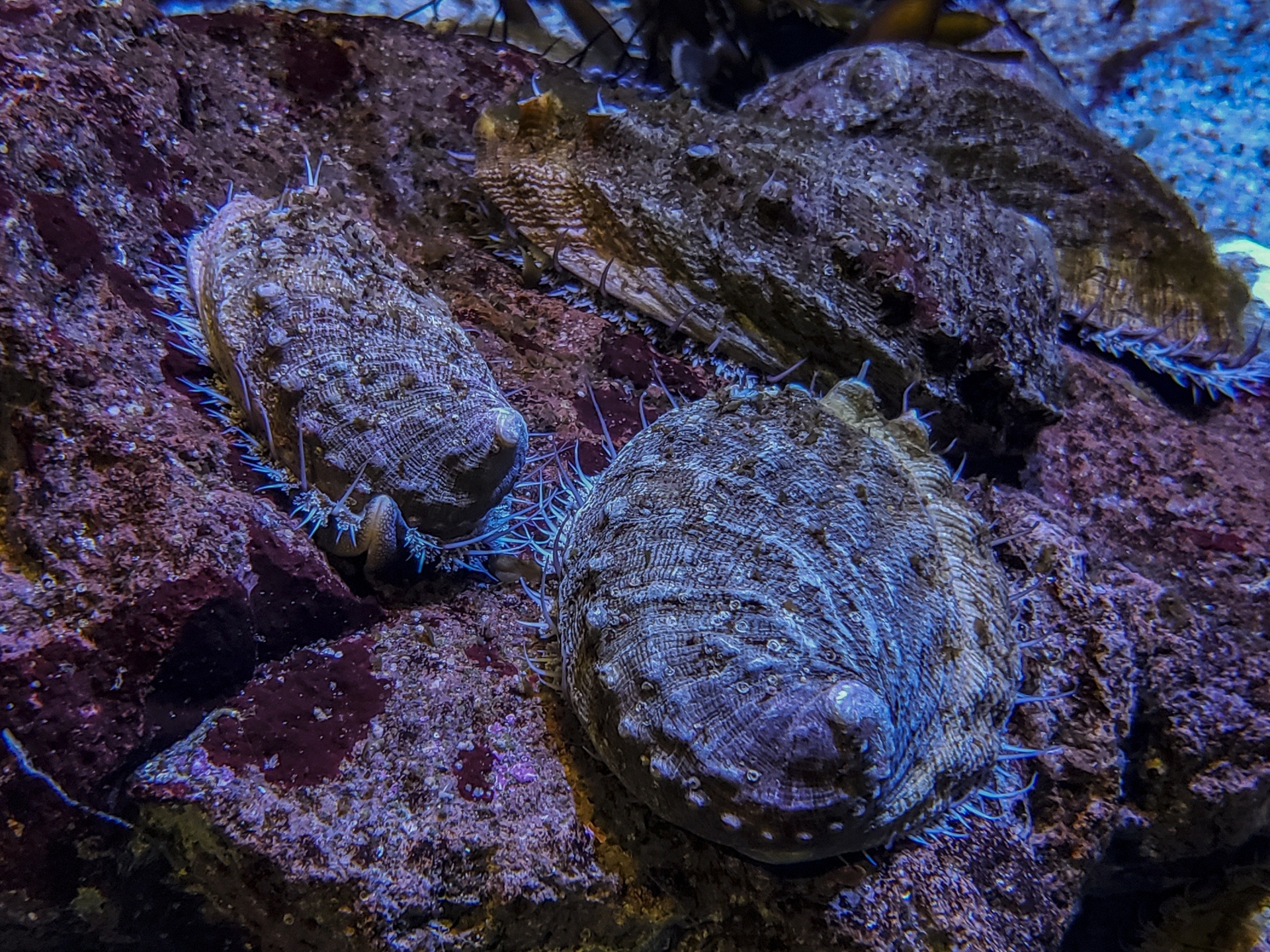 9 Of The Coolest Abalone Pictures