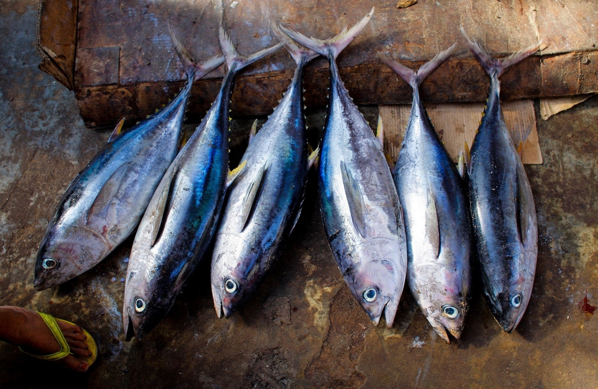 Amazing Facts About Albacore