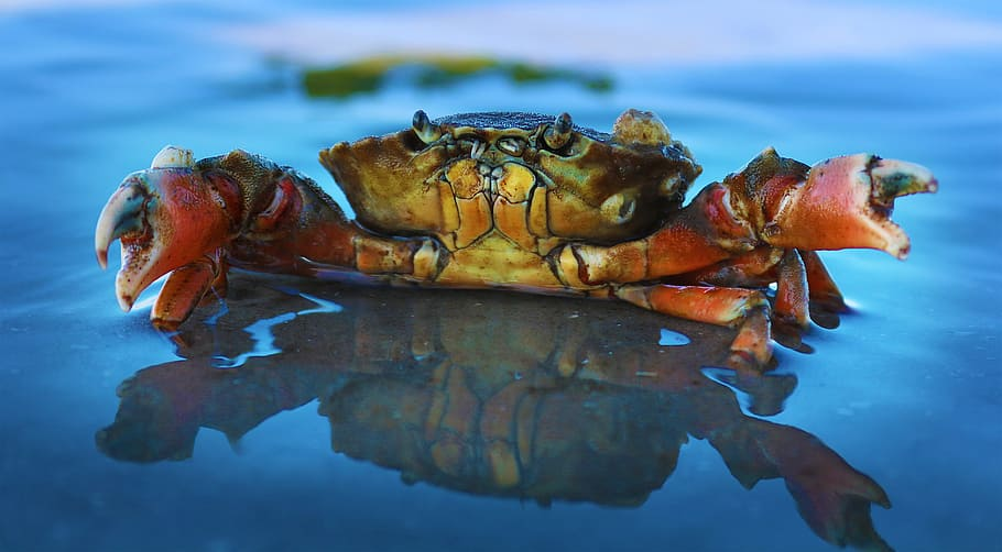 Cool Facts About Blue Crab