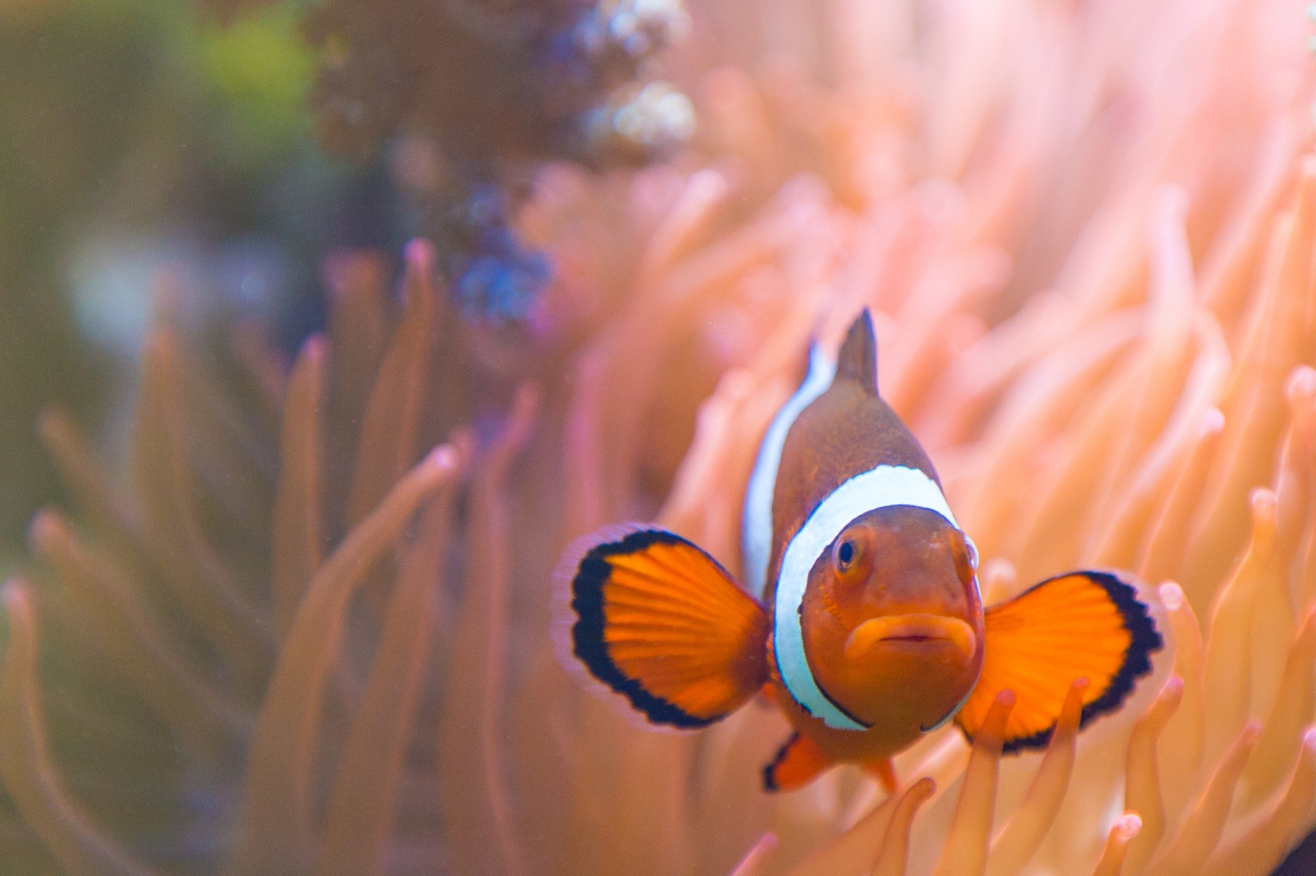 Awesome Facts About Clownfish