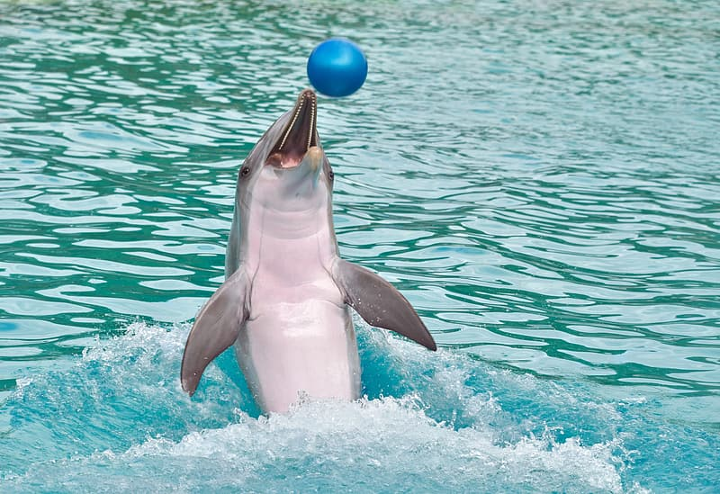 16 Of The Most Amazing Dolphin Pictures 2098075363